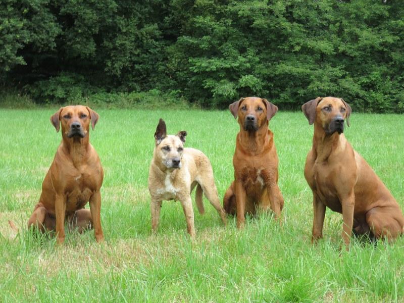 Izzy, Queie, Yuba & PJ