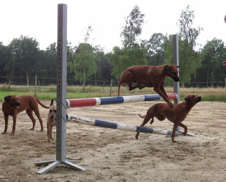 Jumping PJ