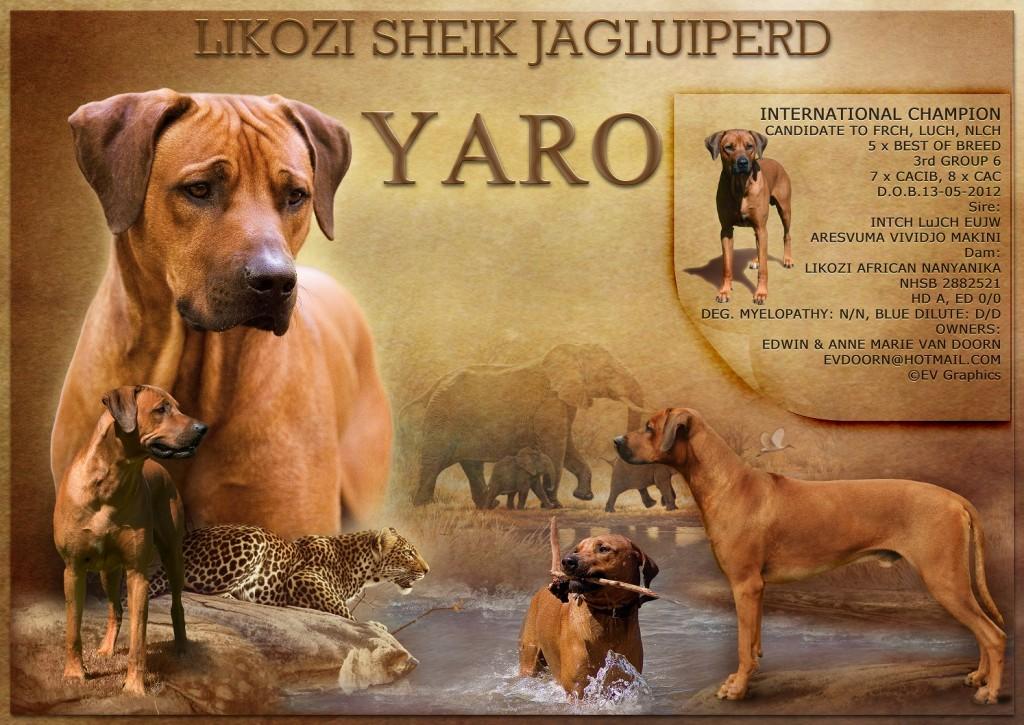Yaro poster