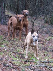 Izzy, PJ & Queie
